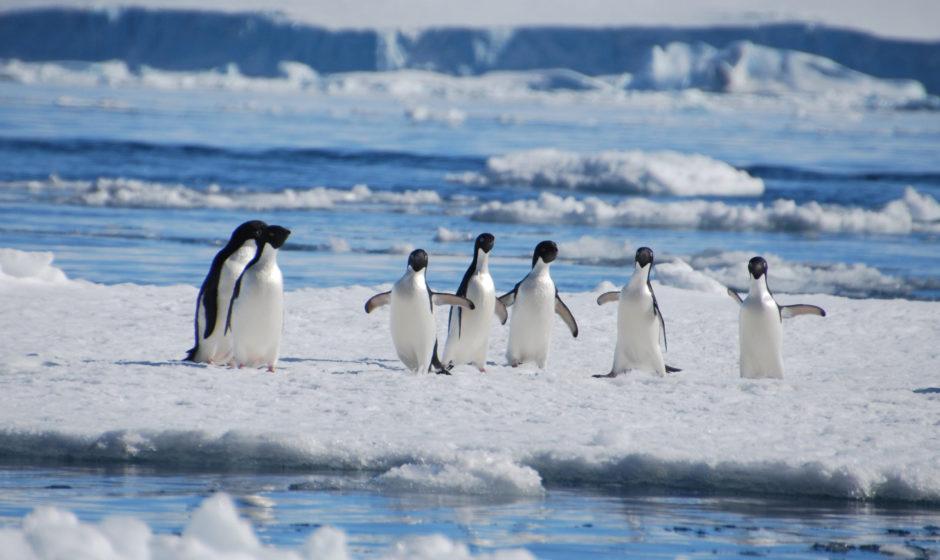 Vivez à l'ambiance du grand froid en visitant l'Antarctique