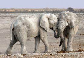 Les lieux à visiter lors de son séjour en Namibie